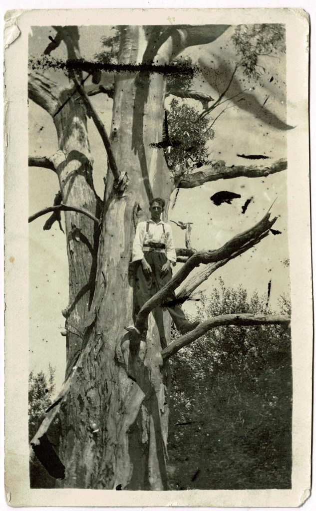 My father Jack, standing mid way up a very large Eucalyptus tree.  He appears to be late teens, going by other photos I have of him with dates, late 1930's.  This photo is probably a bit telling about future careers, aircrew on Liberator Squadron no. 24 in WWII, seismic line working with CSIRO through remote Australia and a career maintaining and repairing remote lighthouses with the Australian Lighthouse Service.   Come to think of it, these careers were largely away from people and likely linked to his view 'people are the problem' approach to the world.